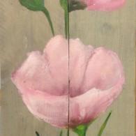 klaproos rose