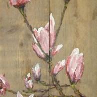 steiger magnolia.jpg